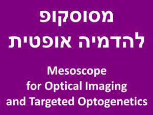 מסוסקופ להדמיה אופטית - Mesoscope for Optical Imaging and Targeted Optogenetics